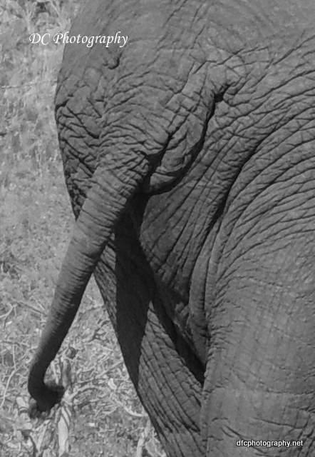elephant_N2173