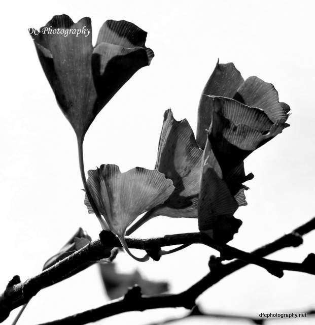 Leaves_0050