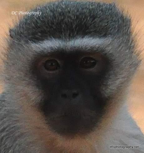 monkey_0721