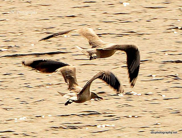 seagulls_0006