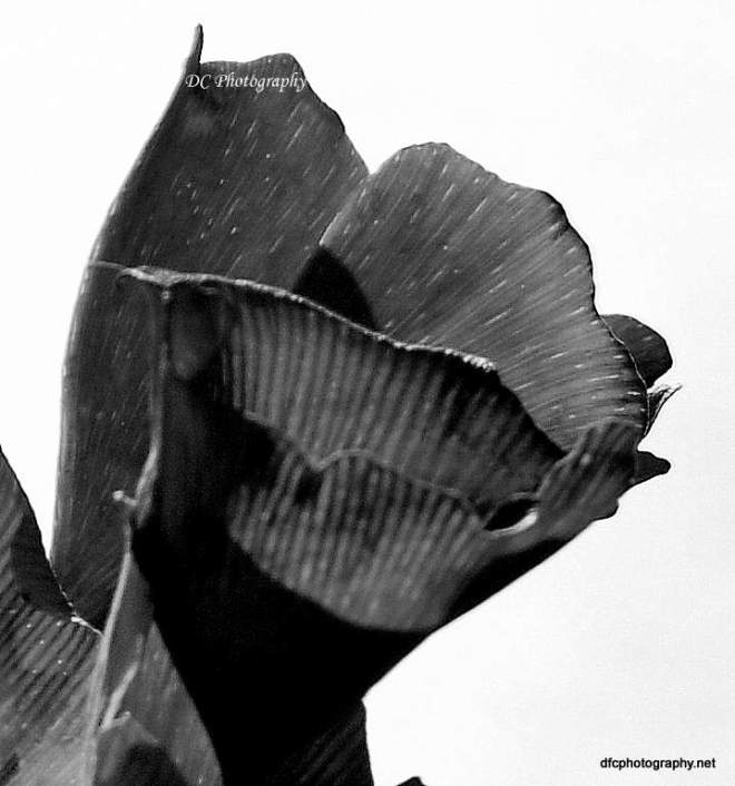 autumn_leaves_0050
