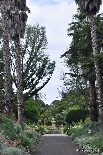 Geelong-Gardens_0007