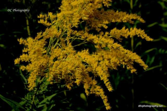 Geelong_Botanic_8963