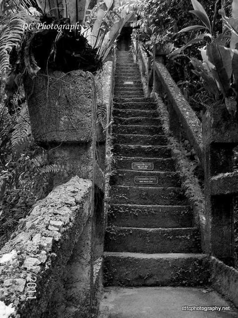 grand-steps_5550