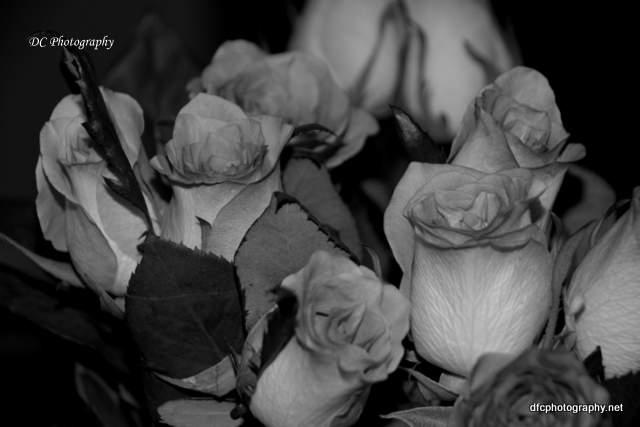 roses_0063