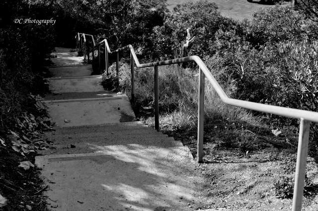 steps_0251