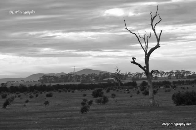 tree_0016