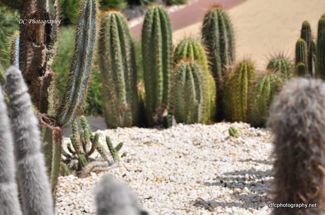 cactus_0139