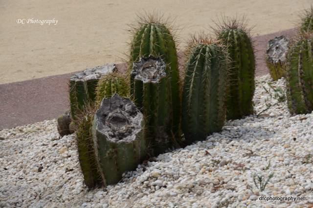 cactus_8983