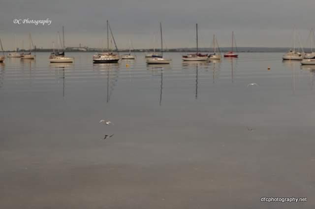 Corio-Bay-Seagull_0084