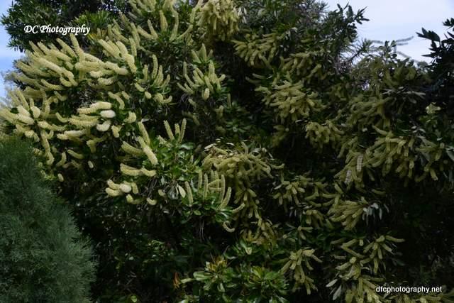 Geelong-Gardens_8985