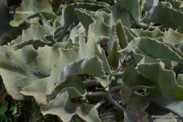 Gelong-botanic-gardens_8982