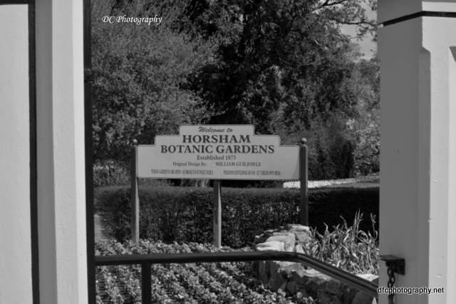 horsham-gardens_7420