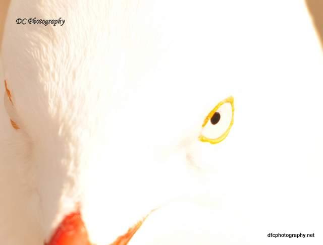 seagull_0065