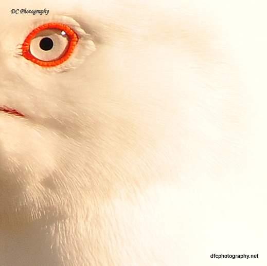 seagull_0074a