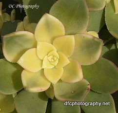 cactus_0890