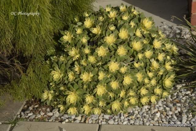cactus_089a