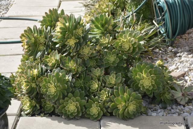 cactus_0955