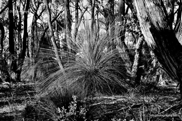grass_tree_0023