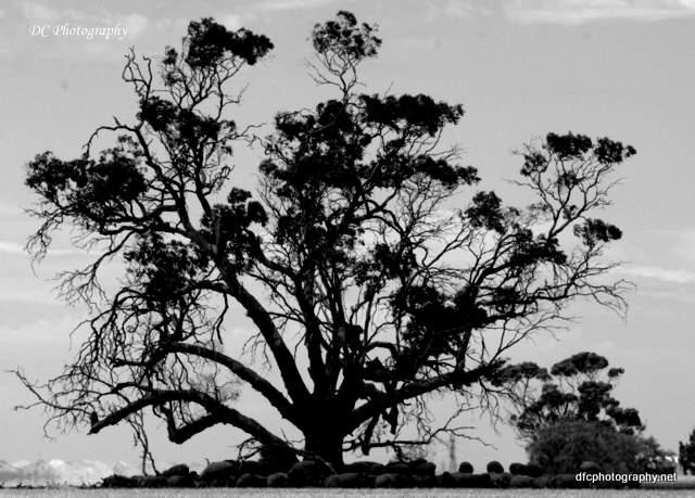 trees_0073