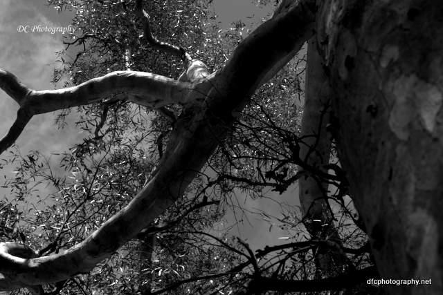 trees_7418