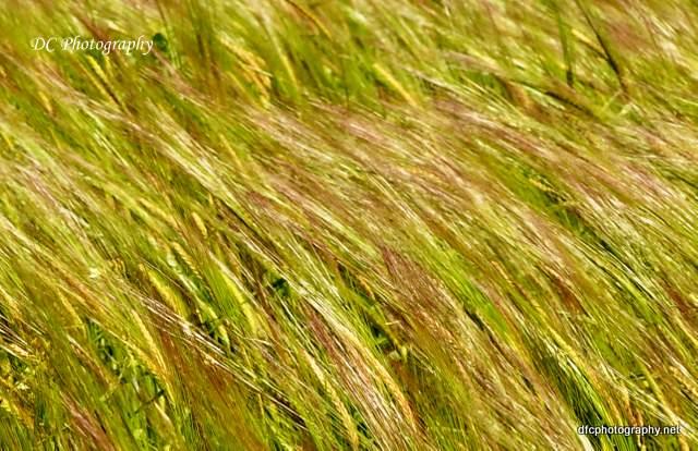 windy_0182
