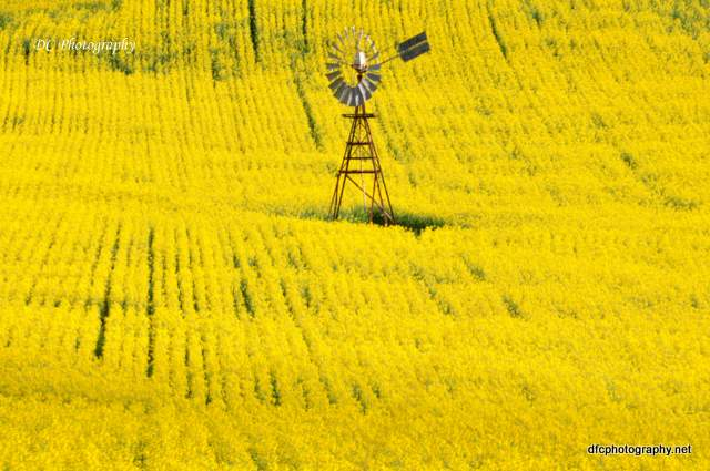 yellow-windmill_0071