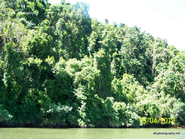 daintree_river_100_5291