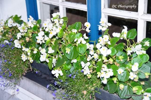 flowers-brugge_0251