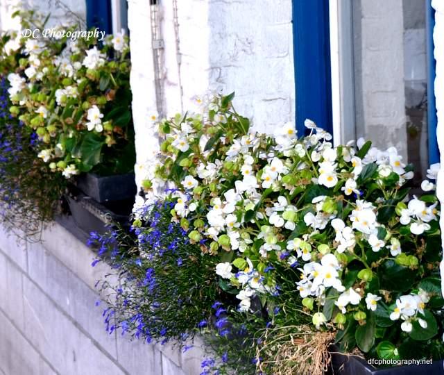 flowers-brugge_0252