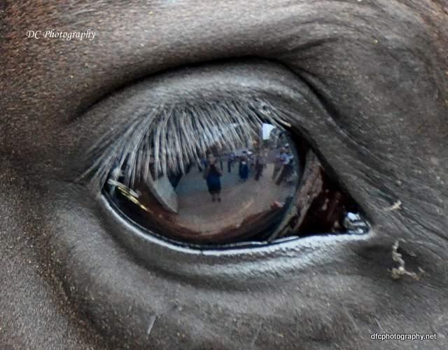 horse-guard_0258