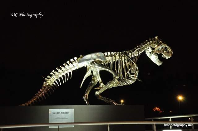 paris-t-rex_0864