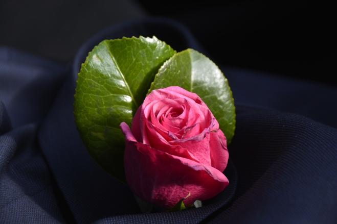 rose-pink_2651