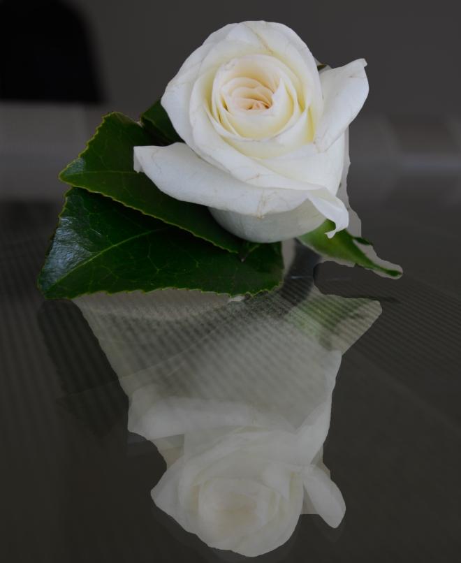 rose-white_2007
