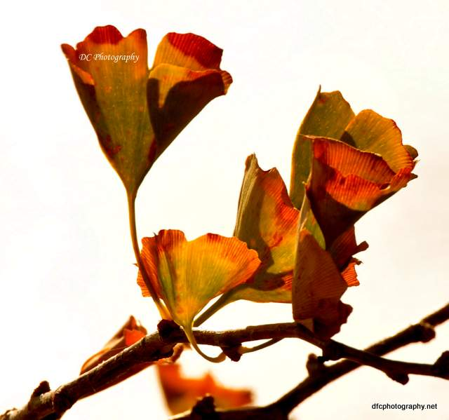 autumn-leaves_0050
