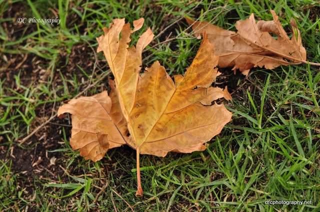 autumn-leaves_0253
