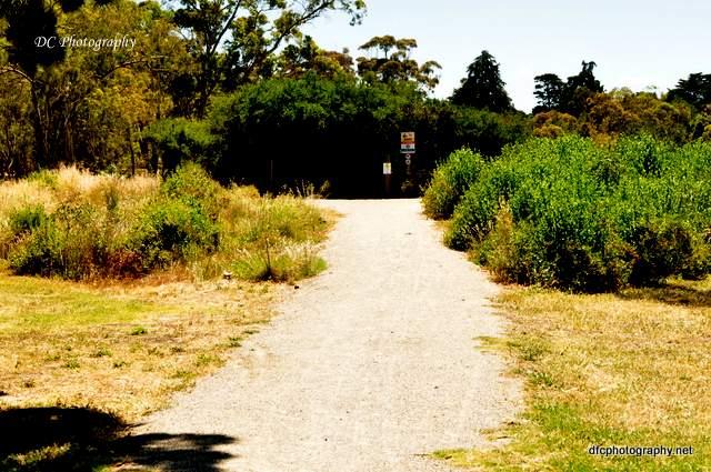 geelong-botanic-gardens1_0191