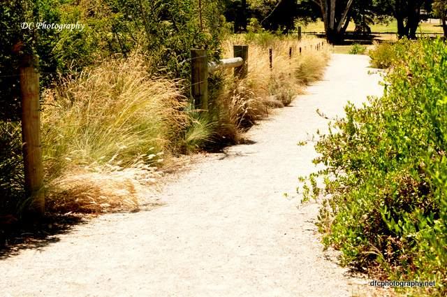 geelong-botanic-gardens3_0189