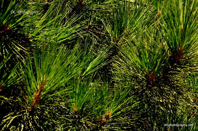 geelong-botanic-gardens8_0190