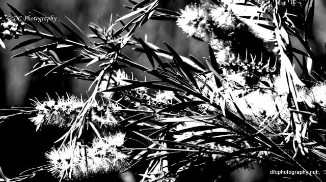geelong-botanic-gardens_0186