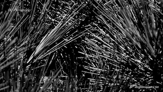 geelong-botanic-gardens_0190