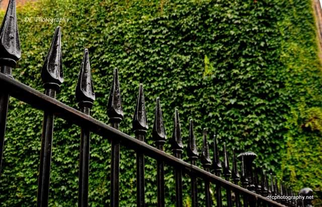 york-fence_0525