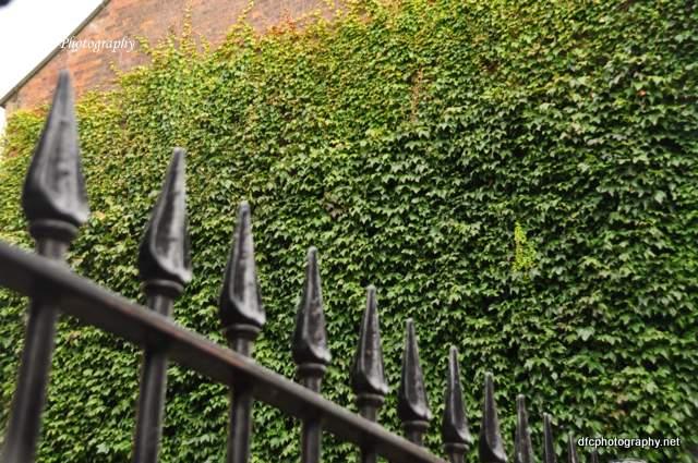 york-fence_0526
