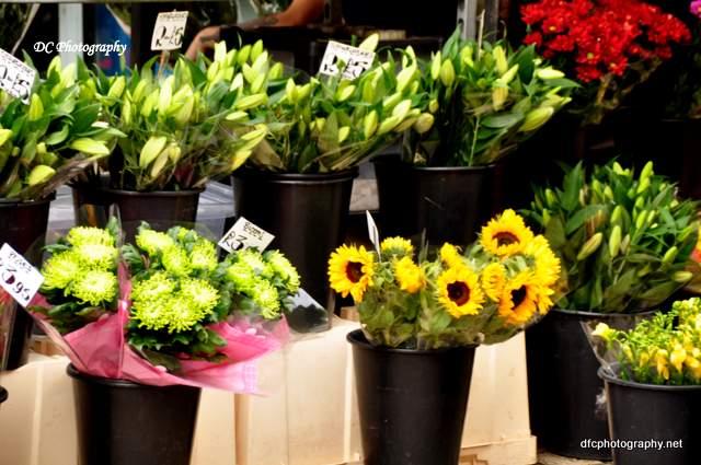 york-flowers_0534