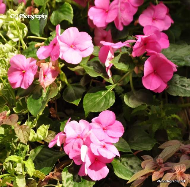 york-flowers_0595