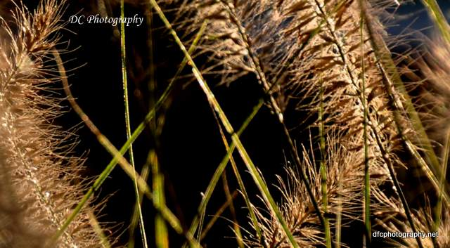 beaune-grass_0018