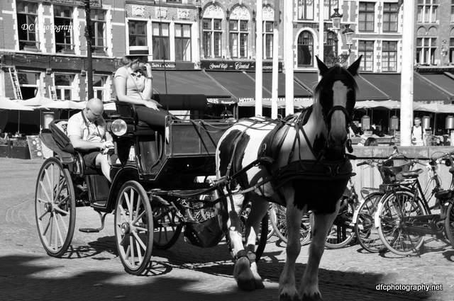 brugge_horse_0183