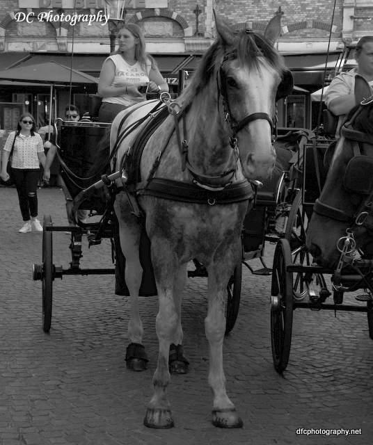 brugge_horse_0186