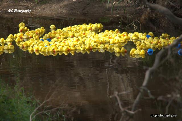 duck-race_0028