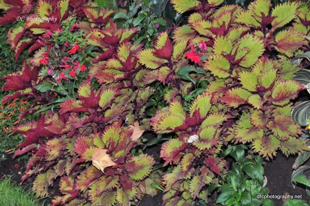 leaves_0101